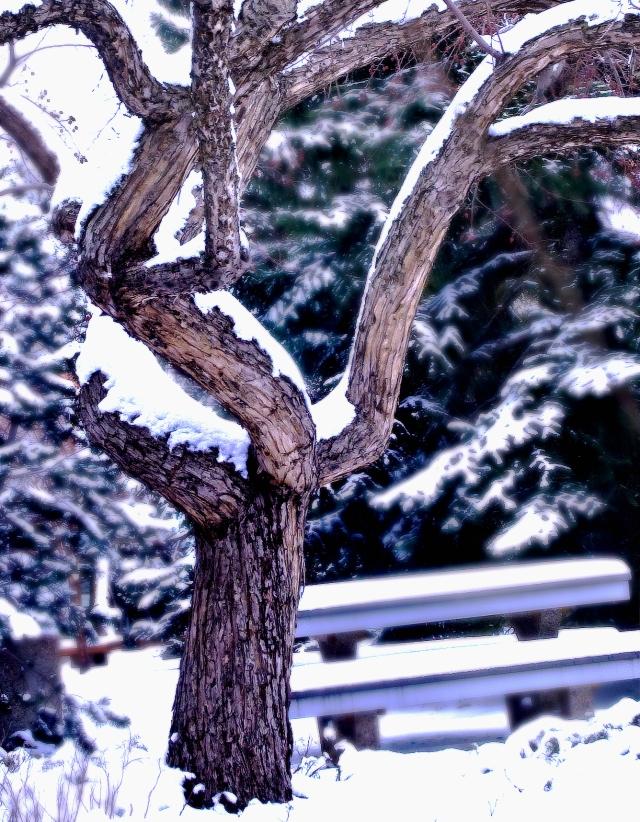 輕飄雪下的樹
