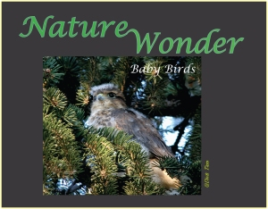 Book 4_Baby_Birds