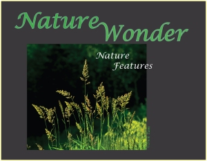 Nature_Features